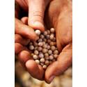 Olej ze Santalových semínek, 20 ml